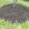 Vær praktisk og køb græskanter til din have